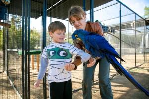 boy and hyacinth macaw
