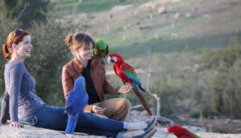 Dagmar and Free Flying Macaws
