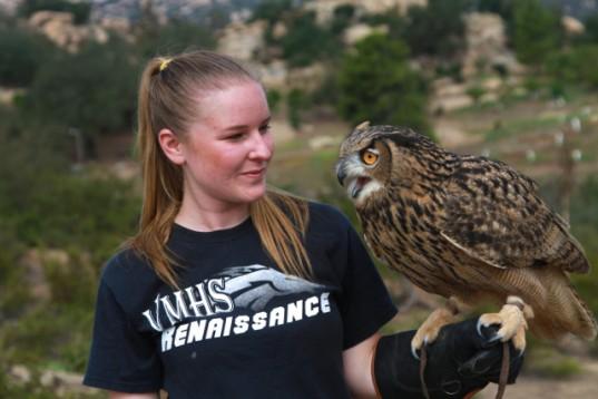 Guinness eurasian eagle owl