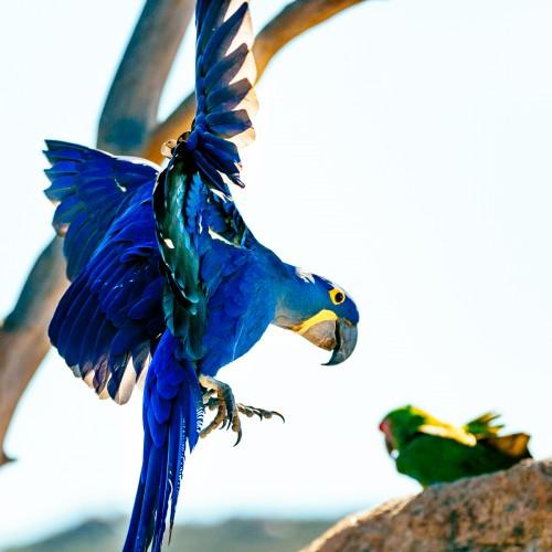 Combination Free Flight, Hornbill Hike and Raptor Adventure