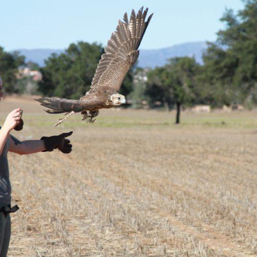 Free Flight Macaw Experience and Falcon Flight