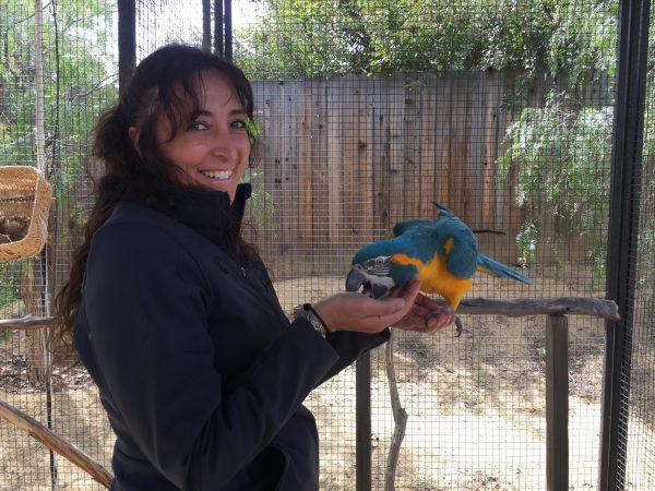 positive reinforcement parrot training workshop