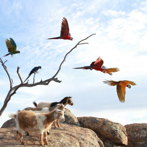 Free Flight Macaw Experience