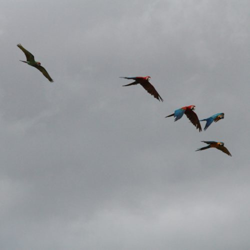 Part II: Ruminations on Free Flying Parrots and Thoughts for Long Lasting Success