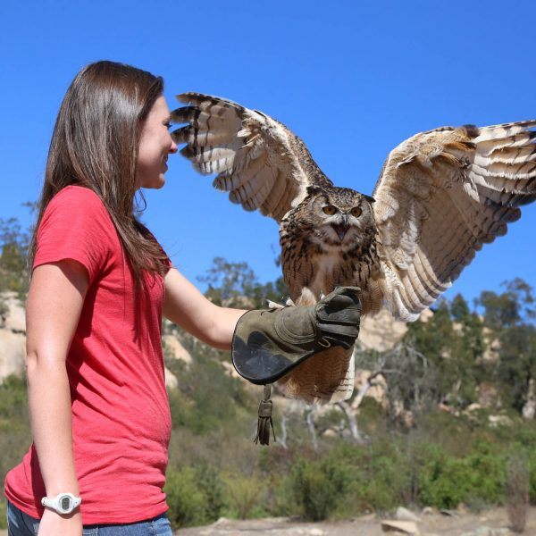 Experience an owl flight