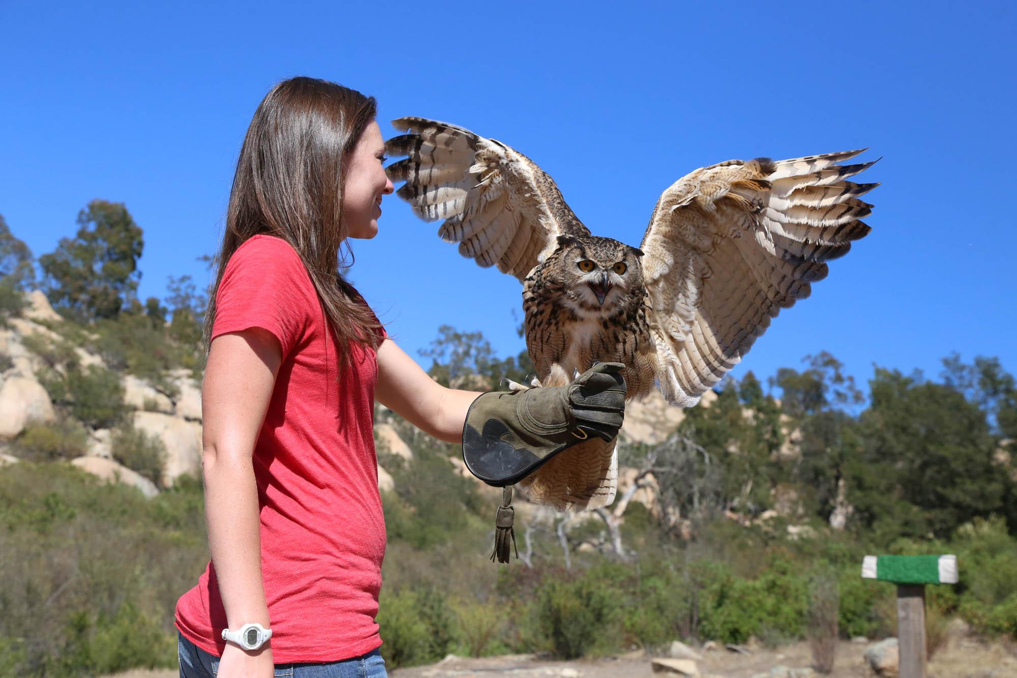 Experience an owl flight