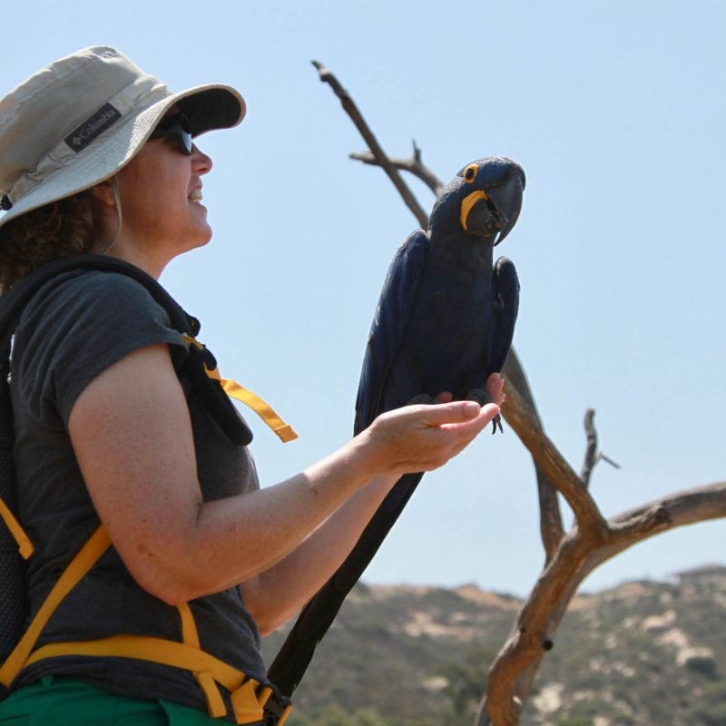 Free Flight Macaw Experience