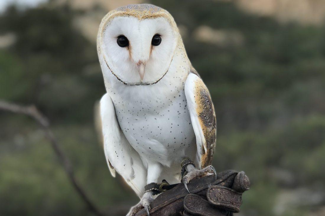 The Birds - Avian Behavior International