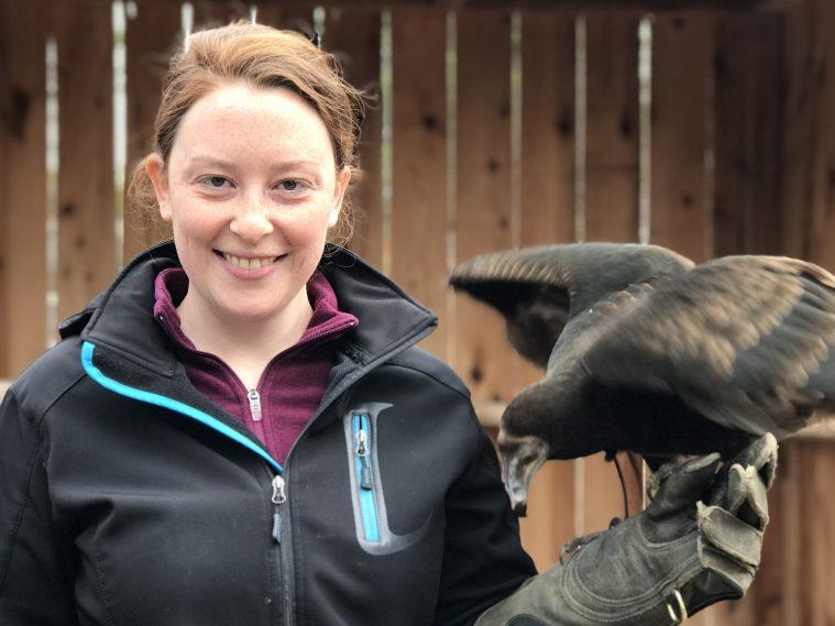 Kelsey reed vulture