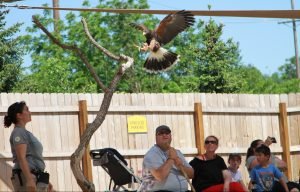 Omaha's Henry Doorly Zoo Bird Show