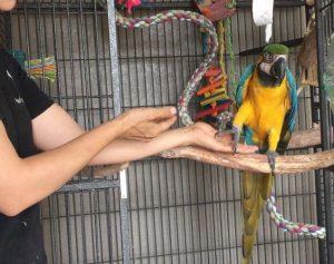 Parrot Behavior training consultations