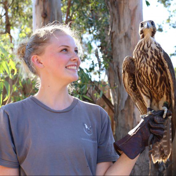 Katie Pnewski saker falcon