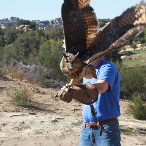 Free Flight and Owl Prowl Experience