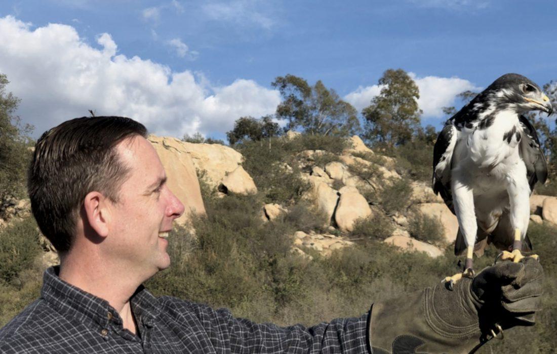 augur buzzard falconry class