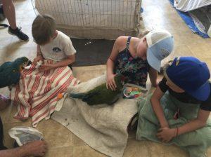 baby macaw socialization