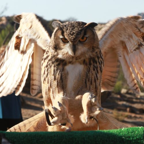 Owl Prowl and Free Flight Experience
