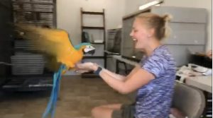 macaw flight training