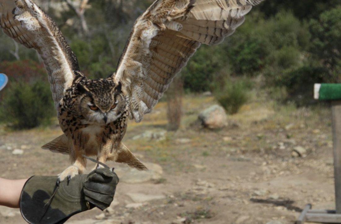 owl falconry class