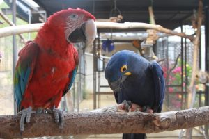 parrot stepping on perch
