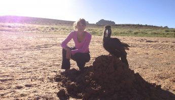 Ground Hornbill at lake Powell