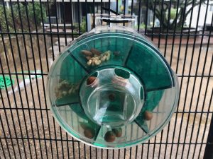parrot foraging toy with nuts