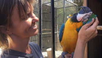 macaw enjoys head scratch