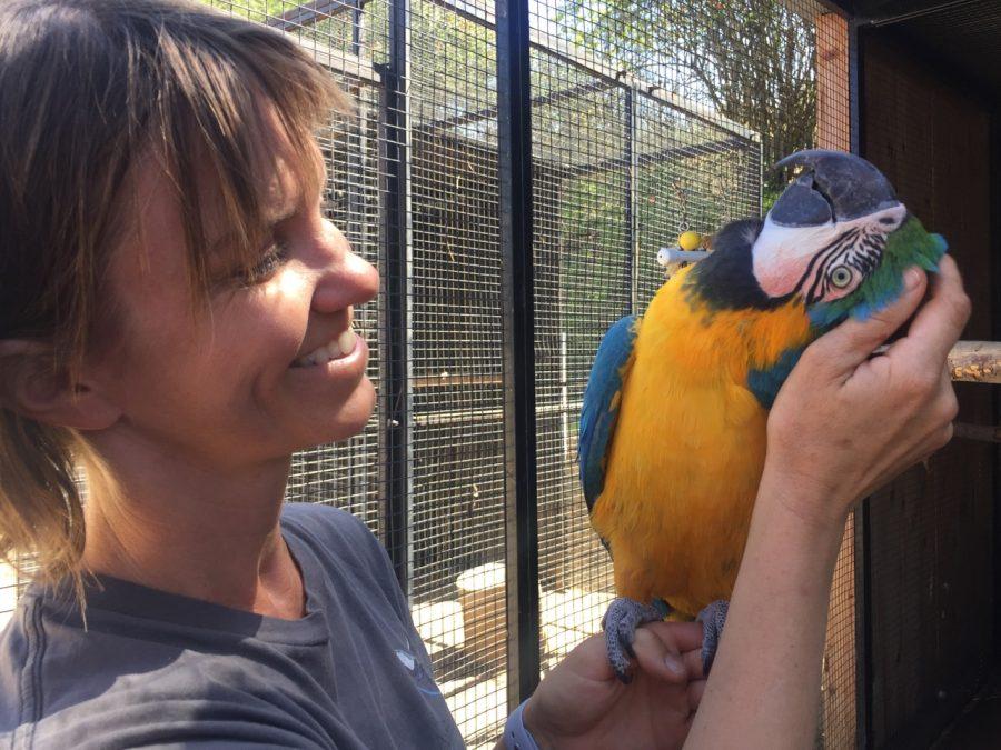 macaw enjoys head scratch