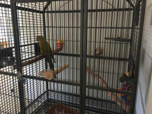macaw toys
