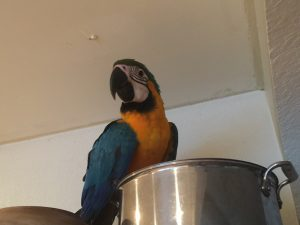 macaw flight training