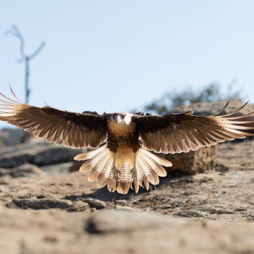 Extreme Bird of Prey Experience