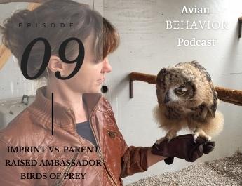 The Avian Behavior Podcast episode 09