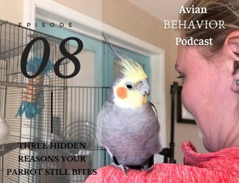The Avian Behavior Podcast episode 08