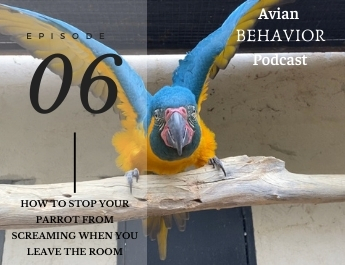 The Avian Behavior Podcast episode 6