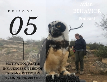 The Avian Behavior Podcast episode 5