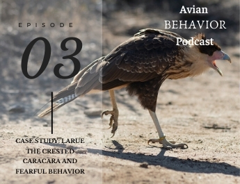 The Avian Behavior Podcast episode 03