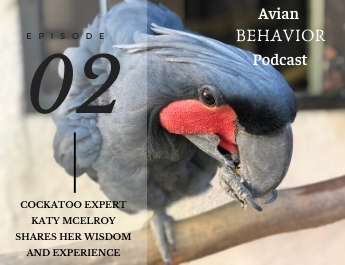 The Avian Behavior Podcast episode 2