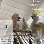 The Avian Behavior Podcast 4