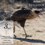 The Avian Behavior Podcast 3
