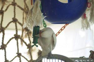 cockatoo on a get a grip net
