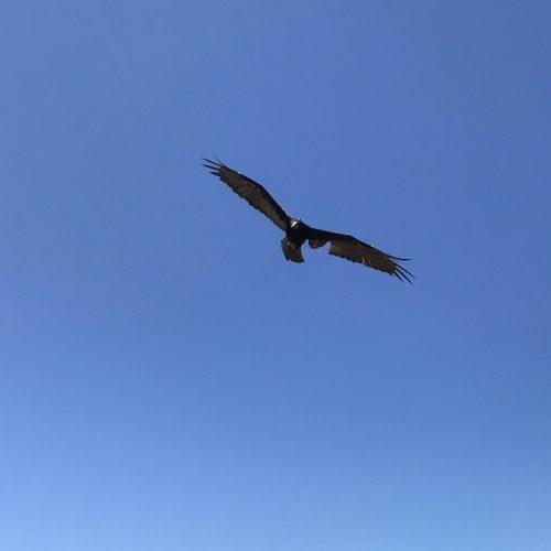 Weight Management and Free Flight Bird Programs