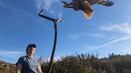 jess free owl flying