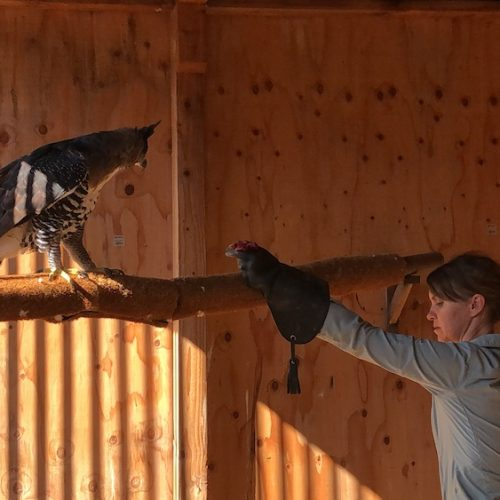 Seven Tips to Building Trust with Birds of Prey