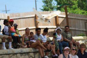 jess free barn owl Henry Doorly Zoo of Omaha