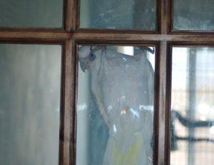 parrot hanging on a door