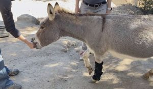 Donkey training