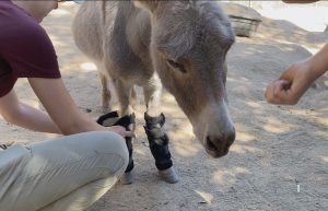 donkey positive reinforcement training