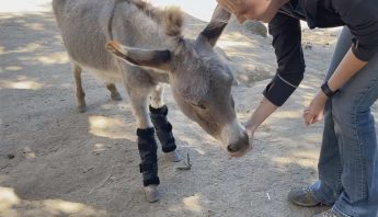 donkey fly boot reinforcement training