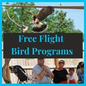 Free Flight Bird Program - Training Services