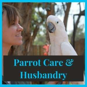 Parrot Care and Husbandry