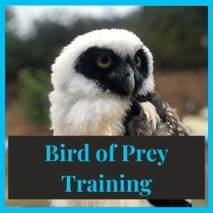 Bird of Prey Training
